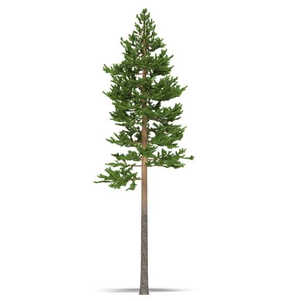 3DOcean Pine 3534953