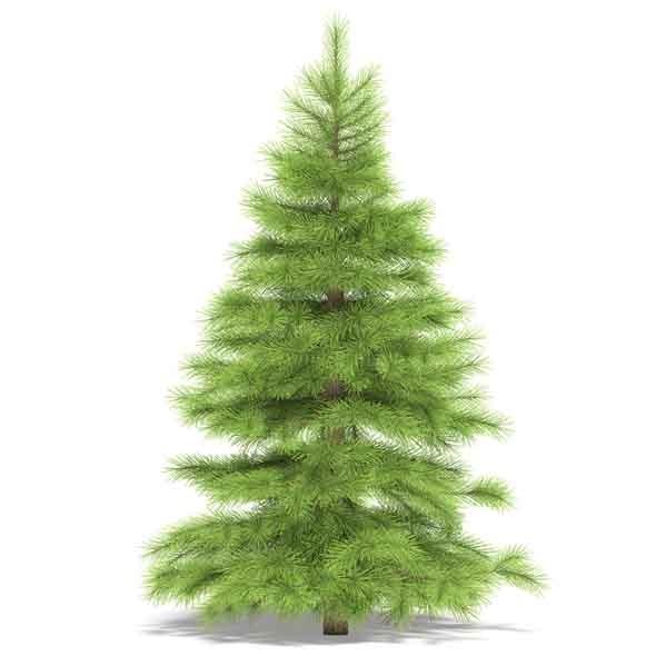 3DOcean Spruce 3536507