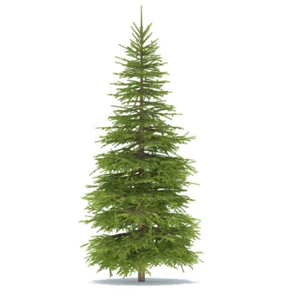 3DOcean Spruce 3539851