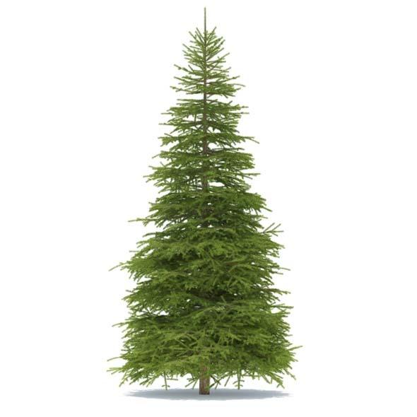 3DOcean Spruce 3540479