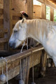 Horses feeding at the trough - PhotoDune Item for Sale