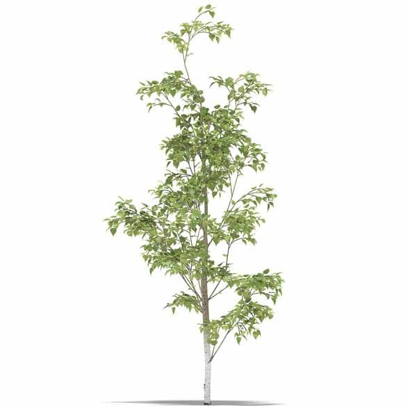 3DOcean Birch 3542633