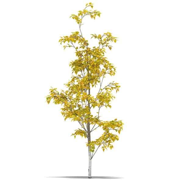 3DOcean Birch 3543078