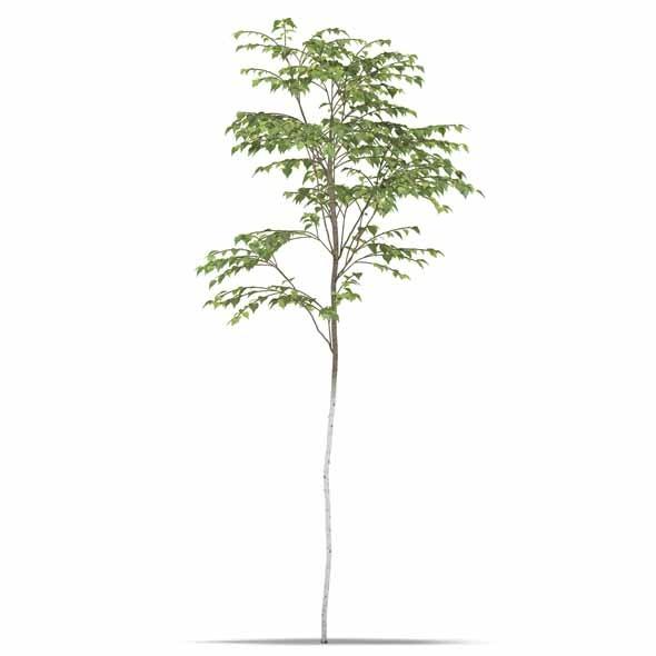 3DOcean Birch 3543663