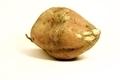 Sweet Potato - PhotoDune Item for Sale