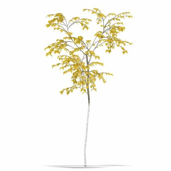 3DOcean Birch 3544300