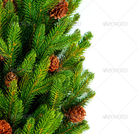 Christmas Tree with Cones border isolated on a White background - Stock Photo - Images