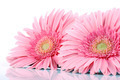 Pink flowers. - PhotoDune Item for Sale