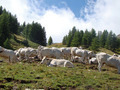 Pasture on Col de Tende - PhotoDune Item for Sale