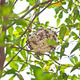 Wasp hive clinging to a tree - PhotoDune Item for Sale