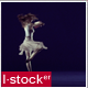 Modern Ballet 22 - VideoHive Item for Sale