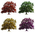 four oak trees isolated - PhotoDune Item for Sale