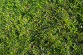 Grass detailed - PhotoDune Item for Sale