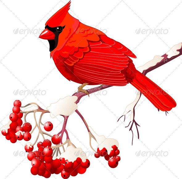 GraphicRiver Red Cardinal Bird 3585483