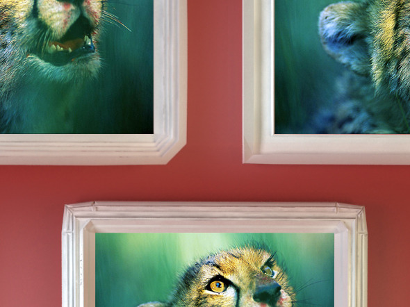 Plaster Photo Frames - 3DOcean Item for Sale