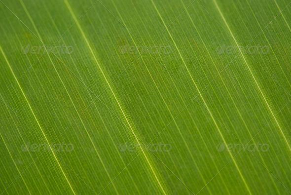 Palm Tree Leaf - Stock Photo - Images