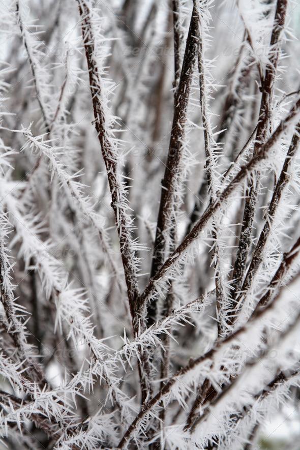 PhotoDune Frosty Spikes 3720233
