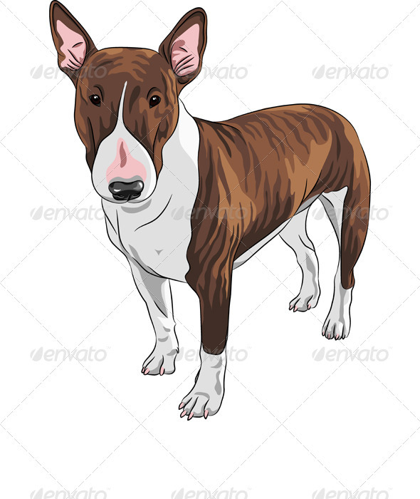 GraphicRiver Vector Cartoon Brown and Tan Bull Terrier Dog 3614278