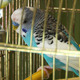 Blue Parrot - VideoHive Item for Sale