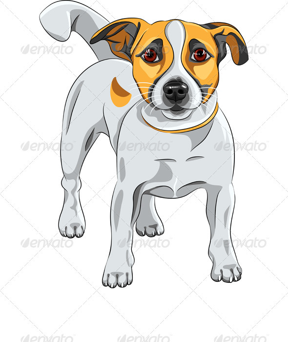 GraphicRiver Vector Sketch dog Jack Russell Terrier Breed 3618031