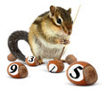 Funny chipmunk playing snooker - PhotoDune Item for Sale