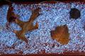 Frozen Leaves - PhotoDune Item for Sale