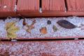 Leaves In Snow - PhotoDune Item for Sale