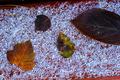 Snow Leaves - PhotoDune Item for Sale