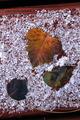 Leaf Display In Winter Ice Snow - PhotoDune Item for Sale