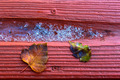 Leaf And Ice - PhotoDune Item for Sale