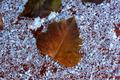 Winter Leaf - PhotoDune Item for Sale