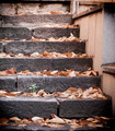 Autumn Leaves on the ladders - PhotoDune Item for Sale