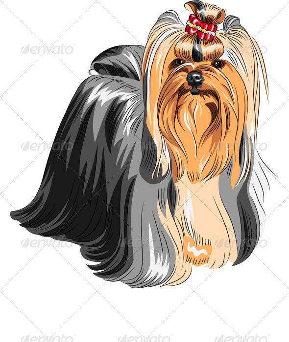 GraphicRiver Vector Pedigreed Dog Yorkshire Terrier 3631919