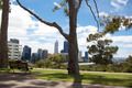 Tree Park and City - PhotoDune Item for Sale