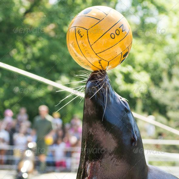 PhotoDune seal with ball 3653937