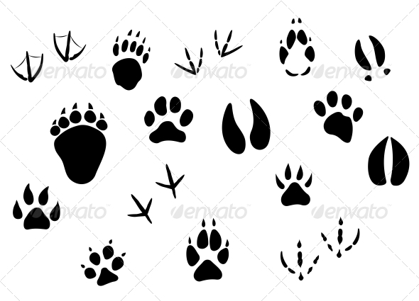 GraphicRiver Animal Footprints and Tracks 3656253