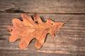 Leaf - PhotoDune Item for Sale