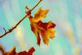 Oak Leaf - PhotoDune Item for Sale