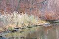 River Shore - PhotoDune Item for Sale