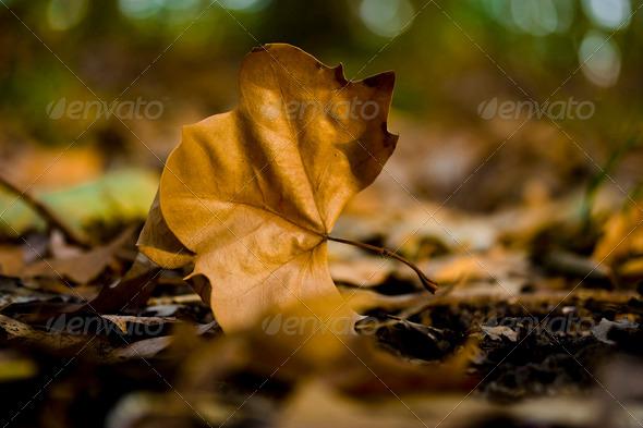 PhotoDune Autumn Leaves 3680591