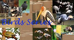 Bird Series Collection