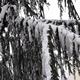 Snow and Tree 1