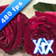 Roses 480fps - VideoHive Item for Sale