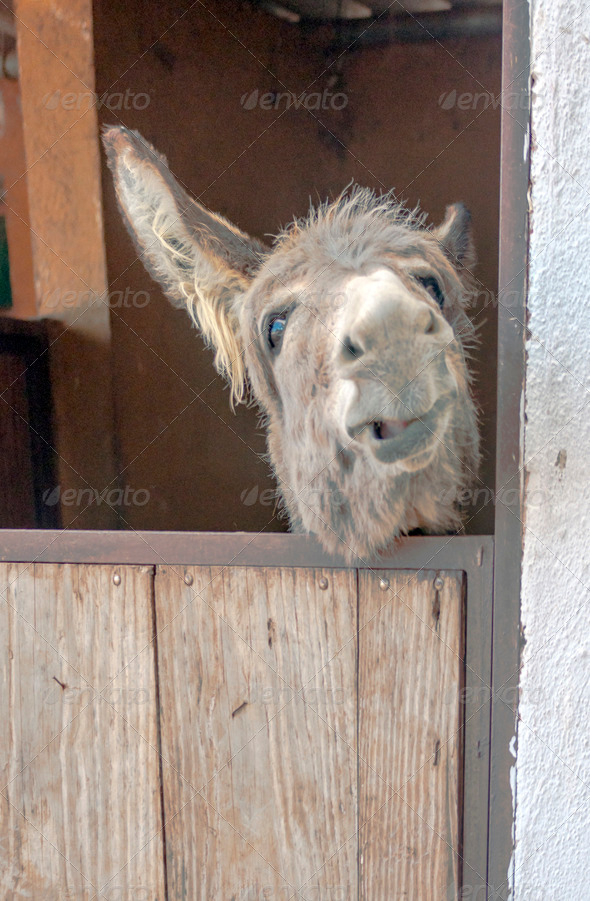 PhotoDune Donkey 3675429