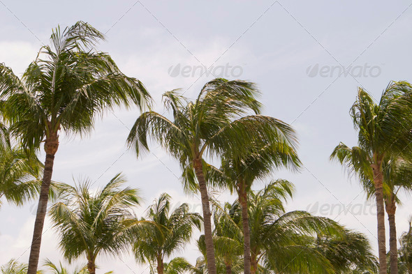 PhotoDune Palm Trees With Sky 3675750