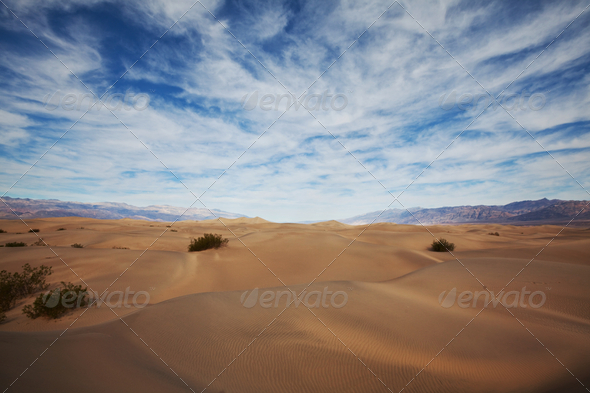 Desert - Stock Photo - Images
