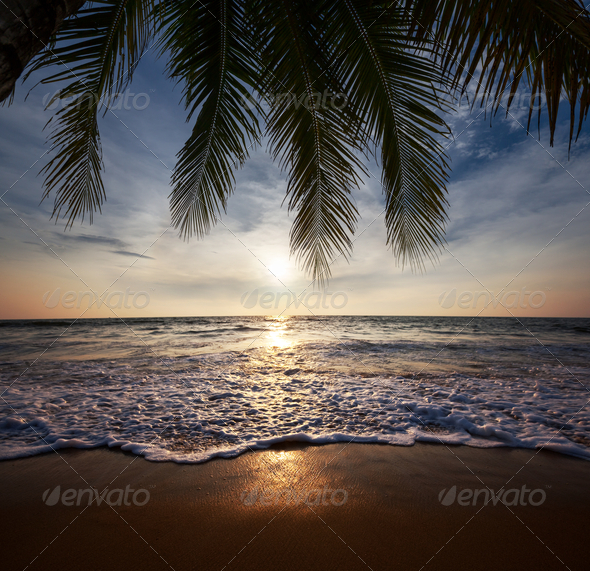 Tropical beach - Stock Photo - Images