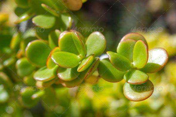 Plants - Stock Photo - Images