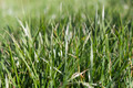 Texture of green grass - PhotoDune Item for Sale