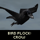 Bird Flock : Crow - ActiveDen Item for Sale